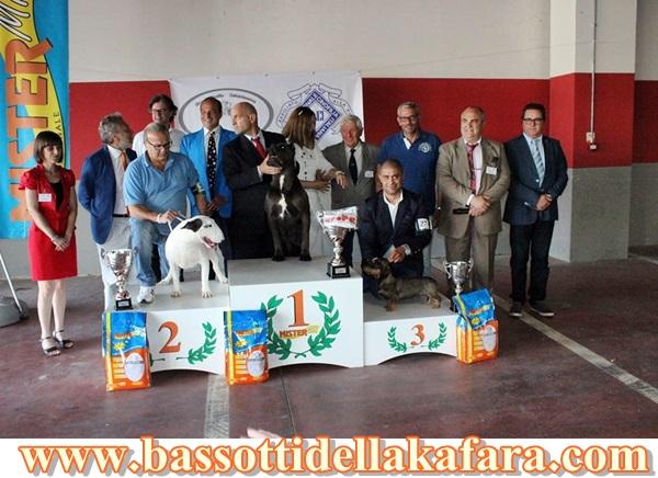 Esposizione Nazionale di Caltanissetta 23-06-…
