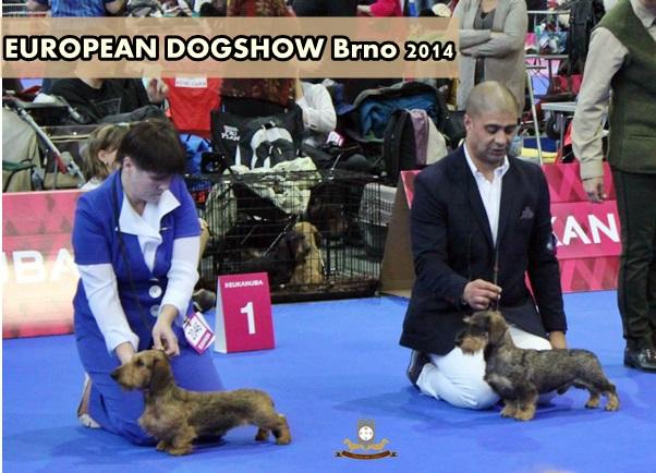 EUROPEAN DOGSHOW Brno 2014