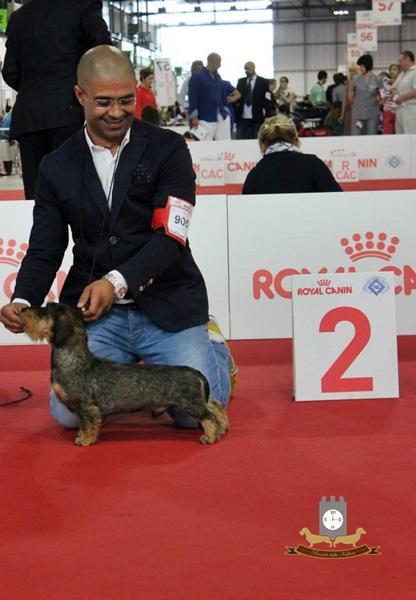 WORLD DOG SHOW Milano