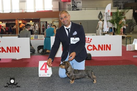 EUROPEAN DOG SHOW 2016 Bruxelles 28/08/2016