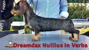 nullius